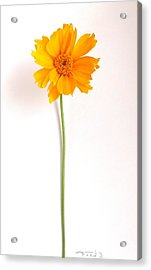 Simply Sunny Acrylic Print by Fred Wilson
