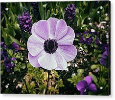 Simply Sweet Acrylic Print by Karen Stahlros