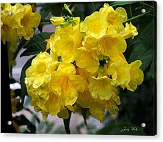 Simply Yellow Acrylic Print by Judy  Waller