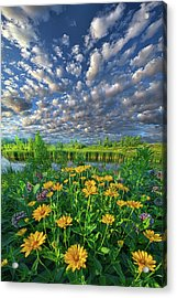 Sing For The Day Acrylic Print by Phil Koch