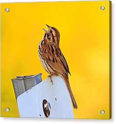 Sing It Out Acrylic Print by Robert Pearson