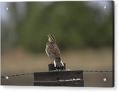 Acrylic Print featuring the photograph Singing A Morning Song by Monte Stevens