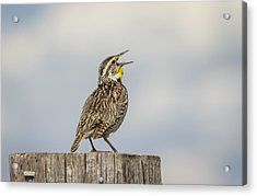 Singing A Song Acrylic Print