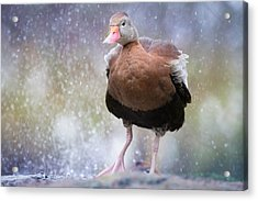 Acrylic Print featuring the photograph Singing In The Rain by Cindy Lark Hartman