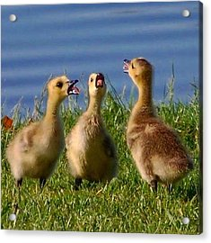 Singing Trio Acrylic Print