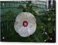 Single Bloom Acrylic Print