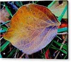 Single Brown Leaf Acrylic Print by Beth Akerman