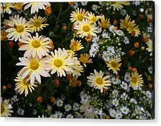 Acrylic Print featuring the photograph Single Chrysanthemums by Kathryn Meyer