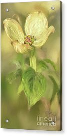 Acrylic Print featuring the digital art Single Dogwood Blossom In Evening Light by Lois Bryan