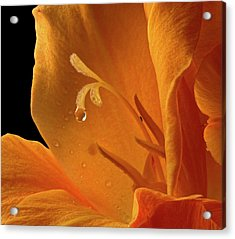 Acrylic Print featuring the photograph Single Drop by Jean Noren