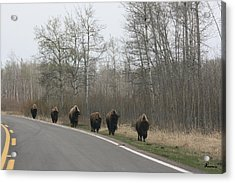 Single File Now Acrylic Print by Andrea Lawrence