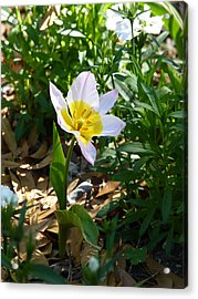 Acrylic Print featuring the photograph Single Flower - Simplify Series by Carla Parris