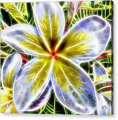 Single Fractal Frangipani Acrylic Print