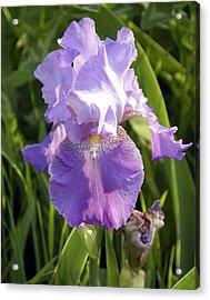Single Iris In Bloom Acrylic Print by George Ferrell