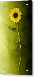 Acrylic Print featuring the photograph Single Long Stem Sunflower by Debi Dalio