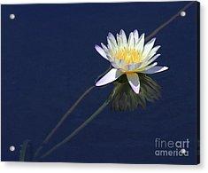 Single Lotus Acrylic Print