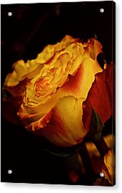 Single March Vintage Rose Acrylic Print by Richard Cummings