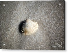 Single Orange White Sea Shell Macro On Fine Sand Acrylic Print by Shawn O'Brien