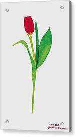 Single Red Tulip Acrylic Print by James M Thomas