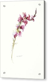 Acrylic Print featuring the painting Single Stem Snapdragon by Sandra Strohschein