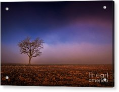 Single Tree In The Mississippi Delta Acrylic Print