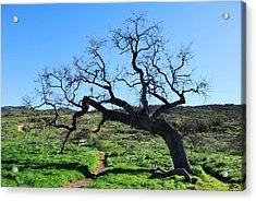 Single Tree Over Narrow Path Acrylic Print