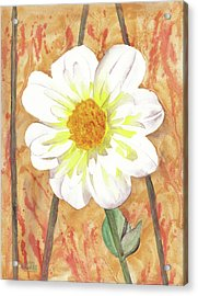 Single White Flower Acrylic Print by Ken Powers