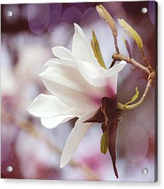 Acrylic Print featuring the photograph Single White Magnolia by Jordan Blackstone