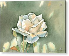 Single  White Rose Acrylic Print by Arline Wagner
