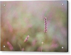 Single Wild Flower Acrylic Print