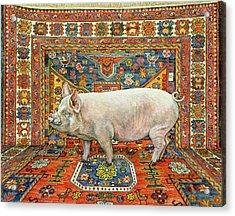 Singleton Carpet Pig Acrylic Print by Ditz