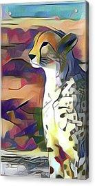 Sitting Cheetah  Acrylic Print