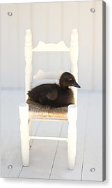 Sitting Duck Acrylic Print by Amy Tyler