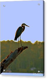 Sitting High On The Log Acrylic Print