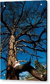 Sitting In Tree 2 Acrylic Print by Scott Sawyer