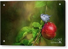 Sitting On An Apple Acrylic Print by Eva Lechner