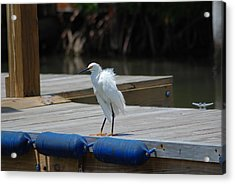 Sitting On The Dock Of The Bay Acrylic Print by Clay Peters Photography