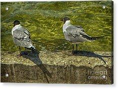 Sitting On The Seawall Acrylic Print by Judy Hall-Folde