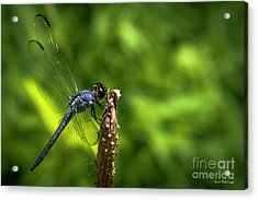 Acrylic Print featuring the photograph Sitting Pretty 2 Dragonfly Art by Reid Callaway
