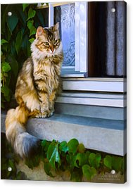 Sitting Pretty Acrylic Print