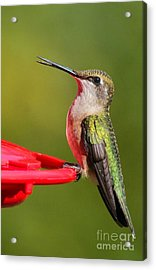 Acrylic Print featuring the photograph Sitting Pretty by Debbie Stahre