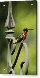Sitting Pretty Acrylic Print by Sarah Boyd