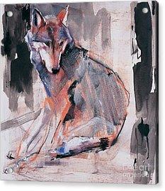 Sitting Wolf Acrylic Print