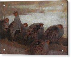 Six Partridges Acrylic Print