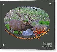Six Point Bull Elk In Colorado Acrylic Print