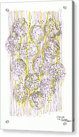 Size Exclusion Chromatography Acrylic Print