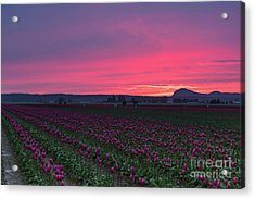 Acrylic Print featuring the photograph Skagit Valley Burning Skies by Mike Reid