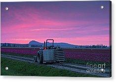 Acrylic Print featuring the photograph Skagit Valley Dusk Calm by Mike Reid