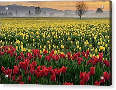 Acrylic Print featuring the photograph Skagit Valley Misty Morning by Dan Mihai