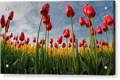 Acrylic Print featuring the photograph Skagit Valley Spring Joy by Dan Mihai